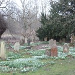 Snowdrops among graves in an ancient country churchyard